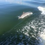 excursions Miami Floride | Nager avec les dauphins Miami