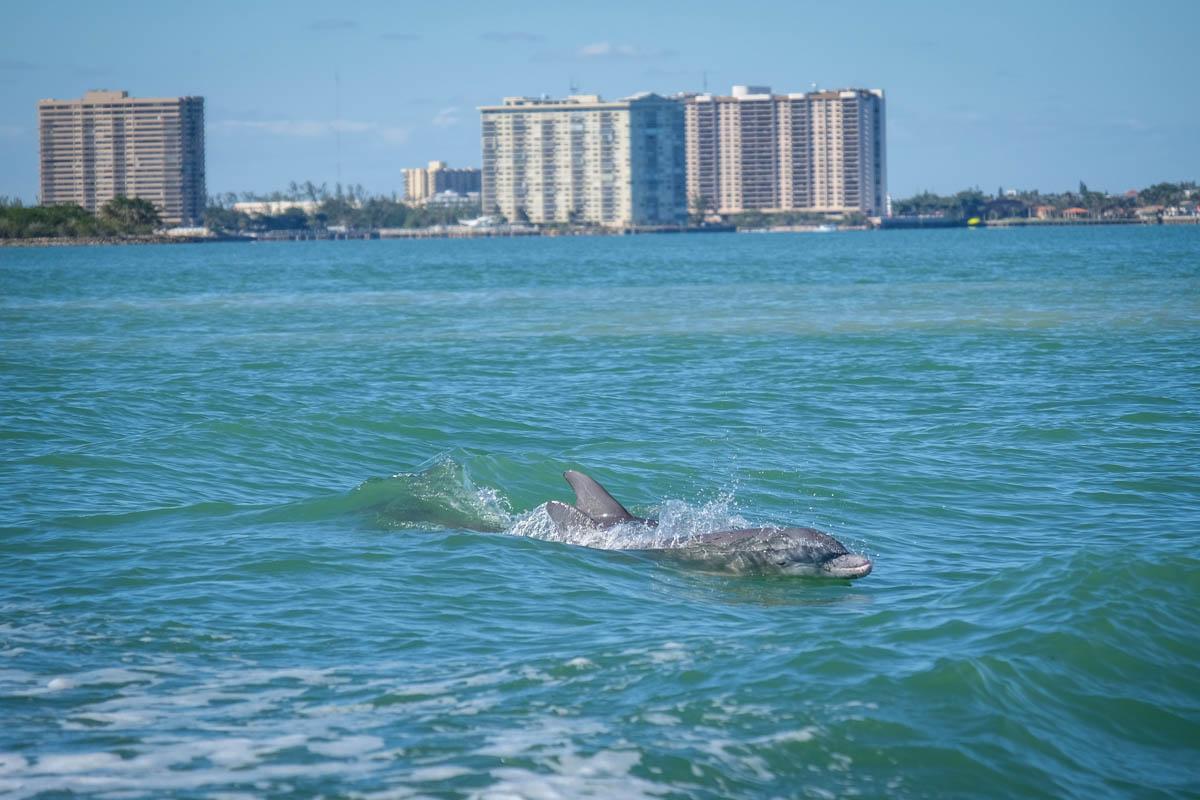 A la rencontre des dauphins à Miami (Floride)