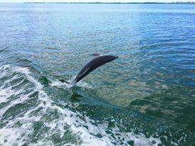 Croisiere Miami à la rencontre des dauphins Miami